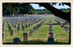 Arlington National Cementary