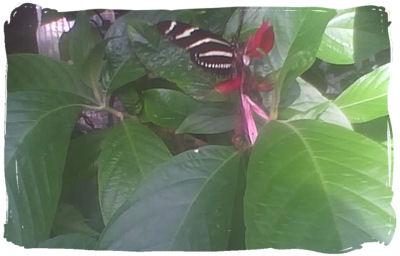 butterfly1.jpg