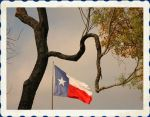 Texas Flag framed by Mesquite Tree