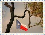 Texas Flag framed by Mesquite Tree