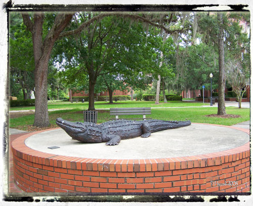 Gator statue on the UF campus