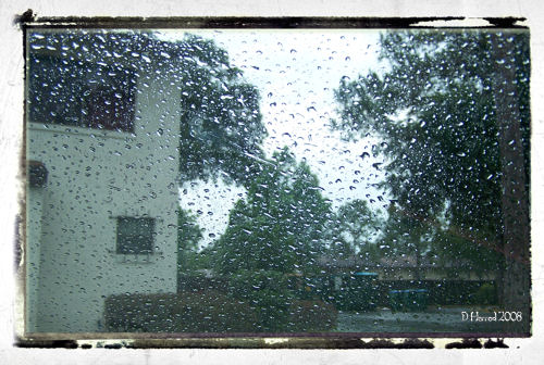 During the spring and summer it rains most afternoons in Florida.