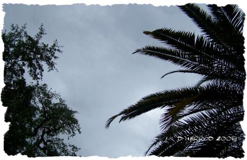 Blue Skies & Palms