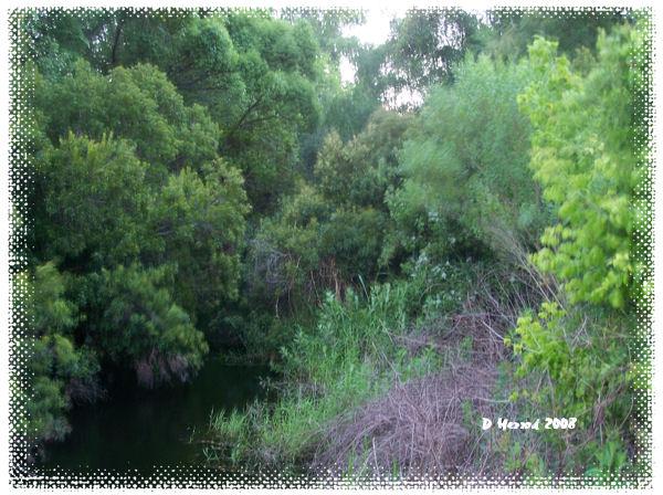 Overlooking stream