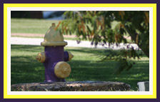 Purple and Gold Fire Hydrant in memory of Fritz a.k.a Dam-it.
