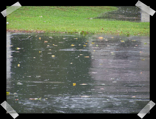 Leaves and rain covered parking lot. You can see the retention pond in the back ground.