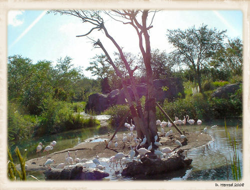Most of Animal Kingdom is used for the Safari