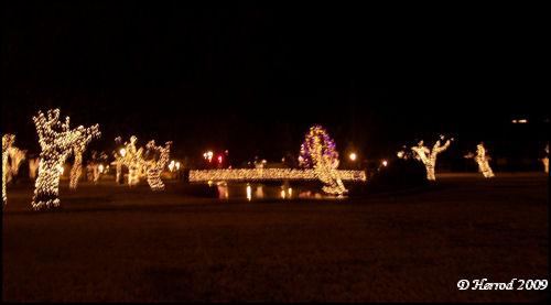 The Pond decorated for Christmas.