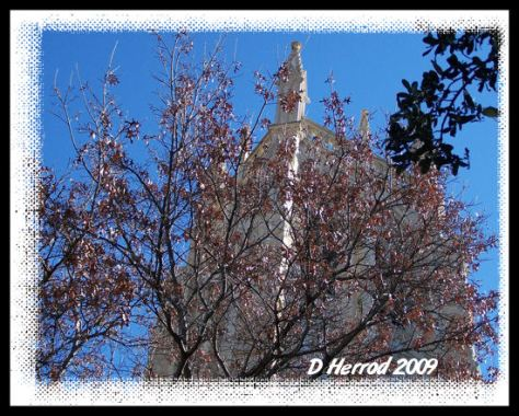 I thought this was a cool shot with the steeple hiding behind the tree.
