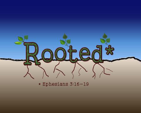 rootedweblrg