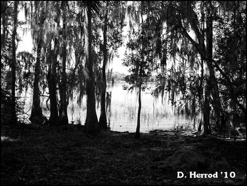 I really enjoy using the black & white settings on my camera. I like how the lake is peaking through the trees.
