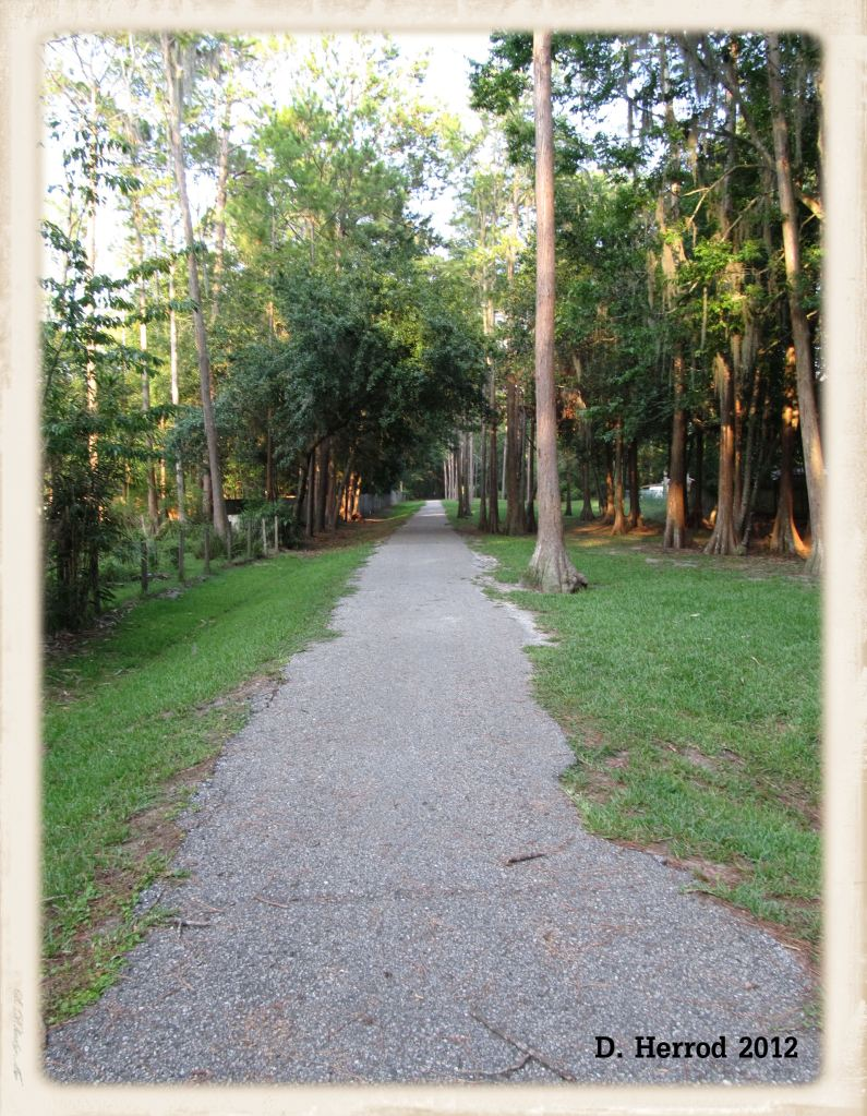 Peaceful Path