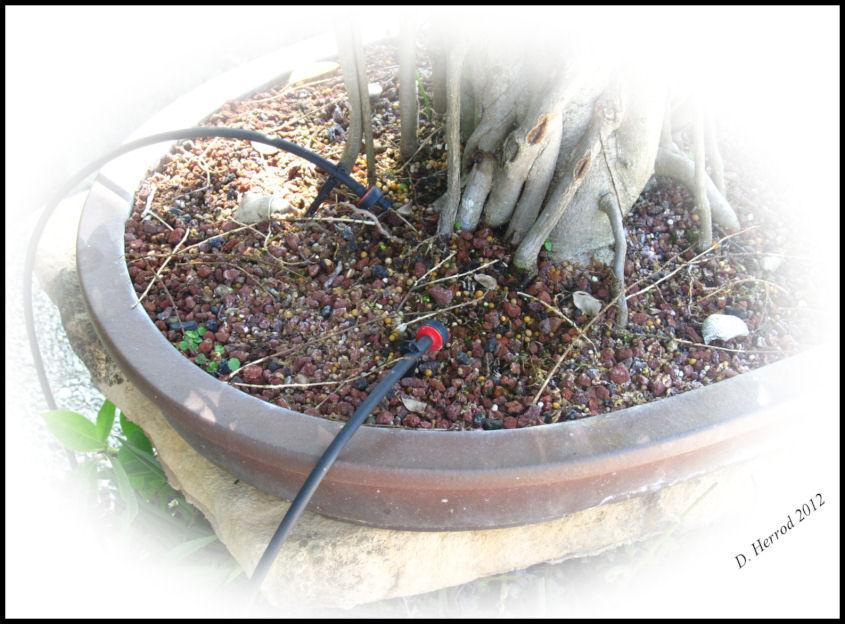 Bonsai water system