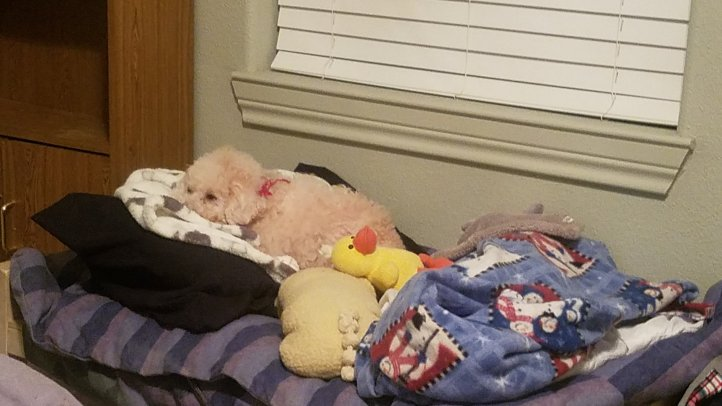 Maddie in her bed.