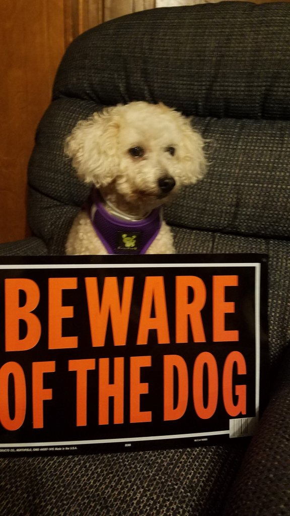 Maddie and her beware of dog sign.