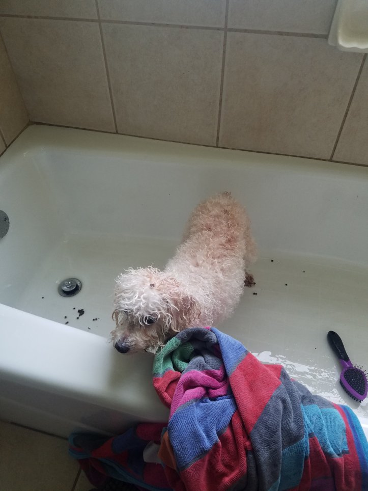 Maddie getting a bath.