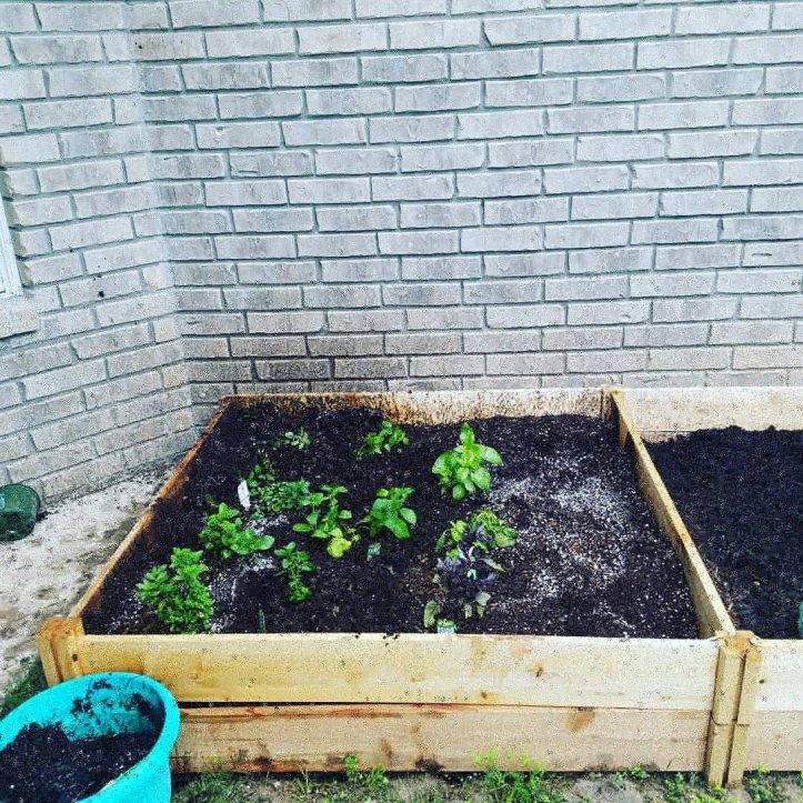 Raised Bed Garden Box 1