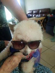 Maddie in sun glasses.