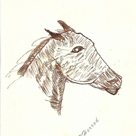Sepia Ink on paper of horse