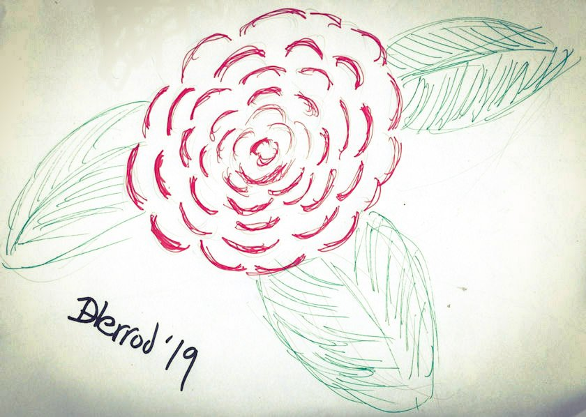 Red rose in ink.