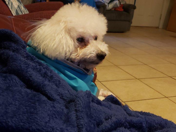 Maddie is under her blanket.