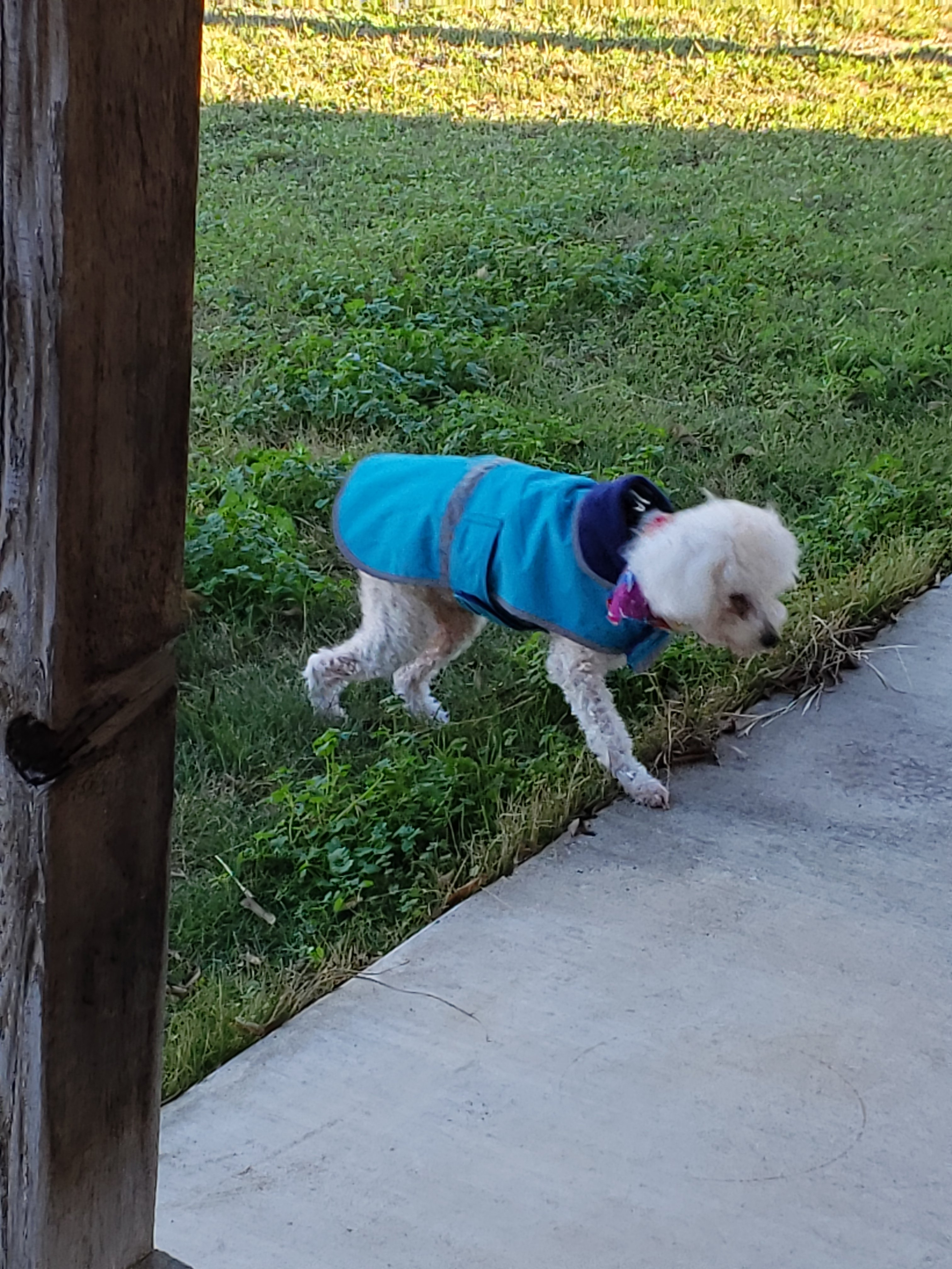 Maddie in her new blue coat.