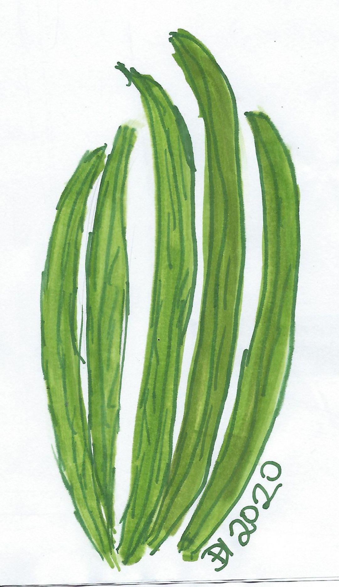 green ink drawing of grass